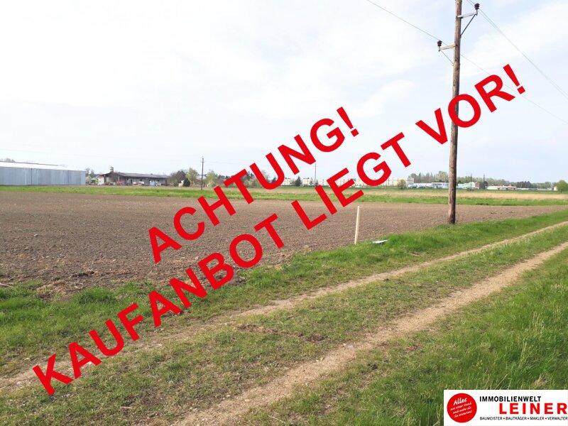 Betriebsgrundstück an der B10 - Enzersdorf an der Fischa! Objekt_10671