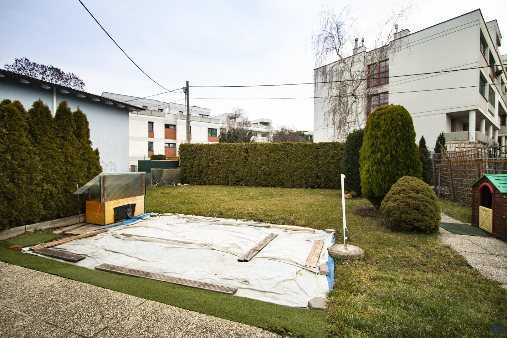 aktuelle Aufnahmen ... der Garten im Winter