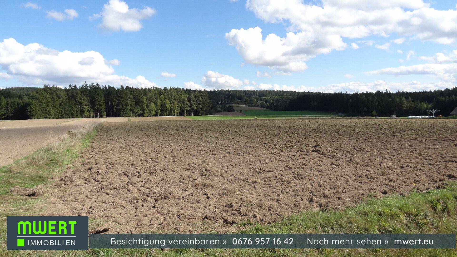 Baugrund im Waldviertel, Reingers, Hirschenschlag