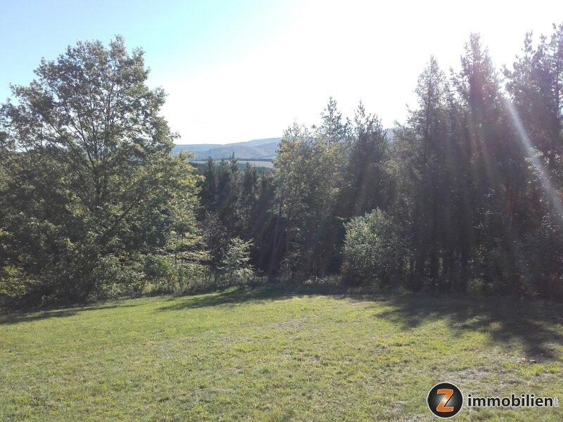 Wald mit guter Zufahrt in Hanglage /  / 7434Bernstein / Bild 0
