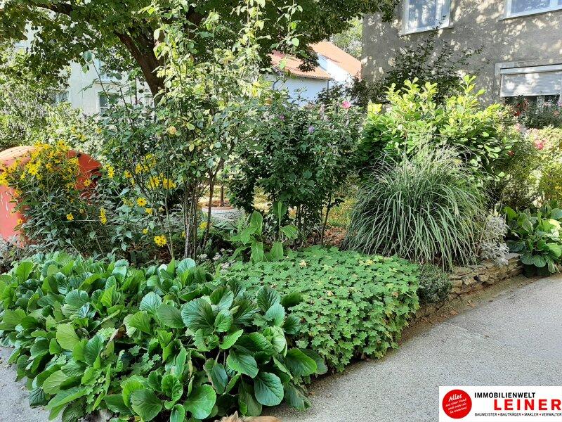 Schwechat  Mietwohnung - 2 sonnendurchflutete Zimmer mit Blick in den liebevoll begrünten Garten Objekt_18102