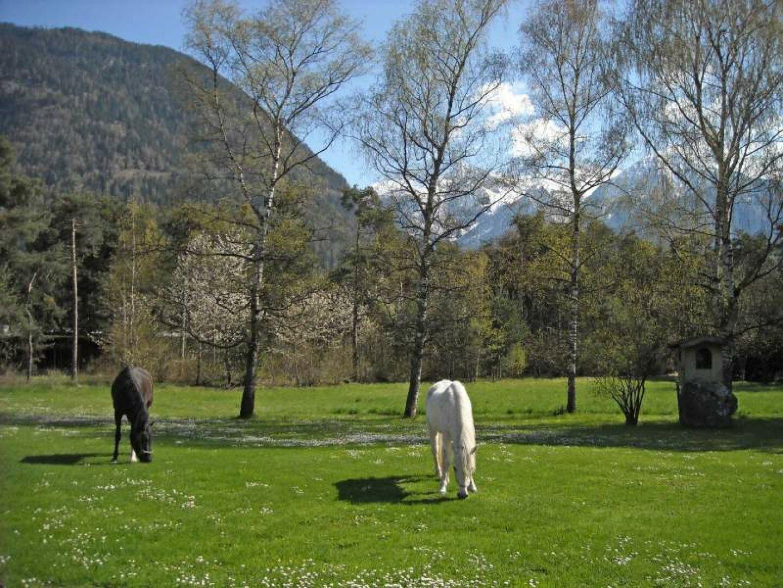 6. Pferde im Garten