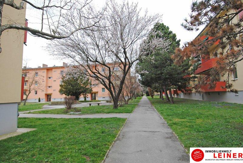 Schwechat - Single Wohnung in zentraler Lage /  / 2320Schwechat / Bild 5
