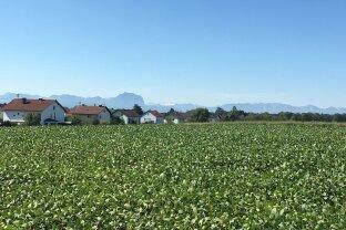 Großzügiges Grundstück mit Panorama- und Gebirgsblick im Zentrum von Gunskirchen