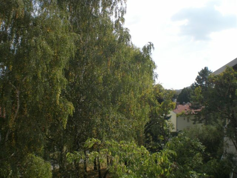 Aussicht vom Balkon imSommer