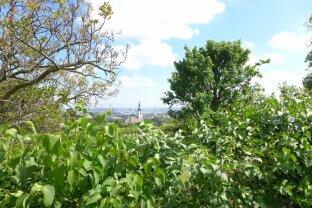 Rarität mit Ausblick über Wien und die Weinberge