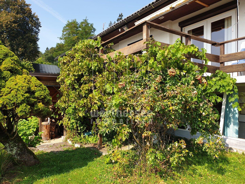 Blick auf die Terrasse mit Weinlaube
