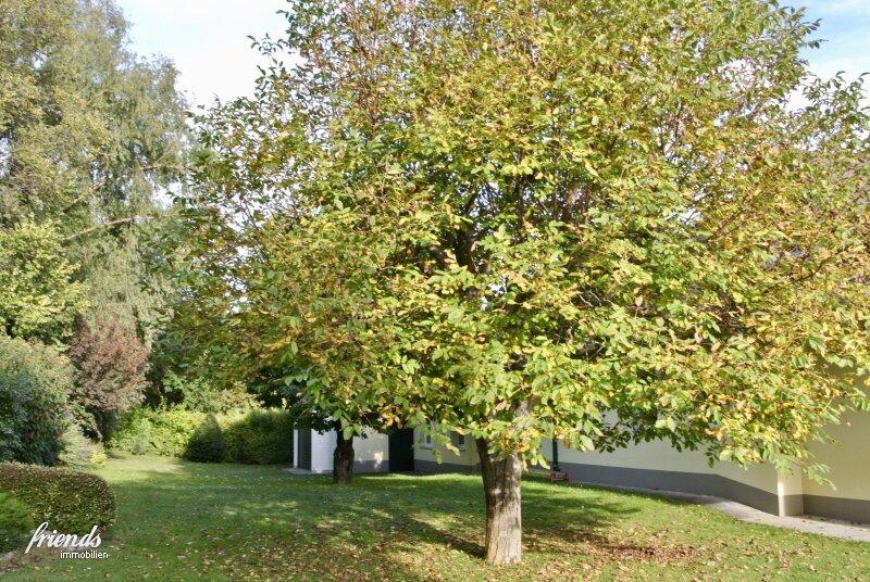 Villa mit Schwimmbiotop in Guntramsdorf /  / 2353Guntramsdorf / Bild 16