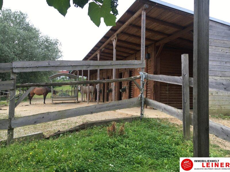 **Pferdebesitzer aufgepasst!! Herrliches Pferdegestüt mit Wohnhaus** Objekt_8744 Bild_352
