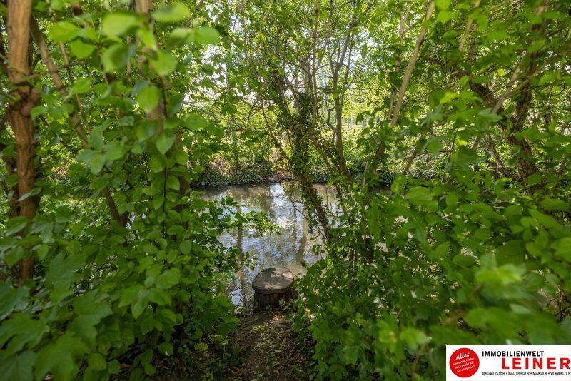ACHTUNG! KAUFANBOT LIEGT VOR! Wohnen direkt am Wasser gegenüber vom Schloss Altkettenhof - Einmalige Gelegenheit - Eckreihenhaus direkt im Zentrum von Schwechat Objekt_16009 Bild_72