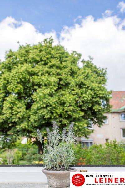*sofort verfügbar* Mitten im Zentrum - wohnen in Schwechat Objekt_11394 Bild_194
