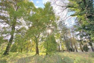 Großes Grundstück, verträumt, historisch, eigener Teich = Viel POTENTIAL