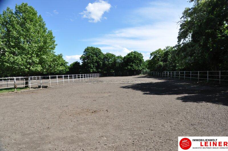 Pferde/Tierliebhaber aufgepasst! Verwirklichen Sie sich Ihren Traum vom eigenen Haus + Pferdestall! Nähe Wien! Objekt_6933 Bild_400