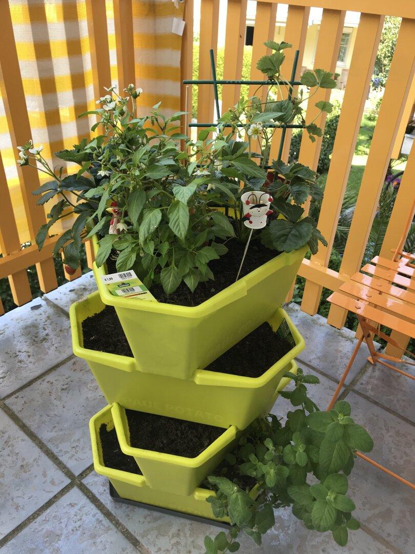 Gartenkultur am Balkon
