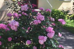 Grünblick,, Gartennutzung  absolute Ruhe in Hietzing