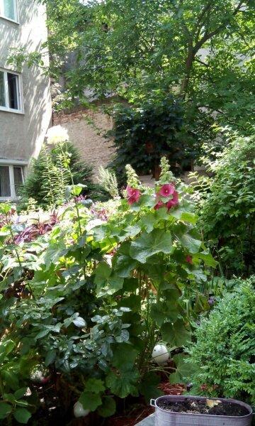 2 Zimmer Wohnung in 1170 Wien /  / 1170Wien / Bild 8