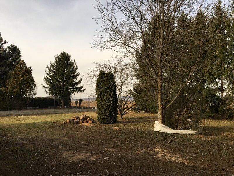 *GROSSES EINFAMILIEN-HAUS IN GRÜN-RUHELAGE - 1.300 m² GRUND! /  / 7021Gemeinde Draßburg / Bild 10
