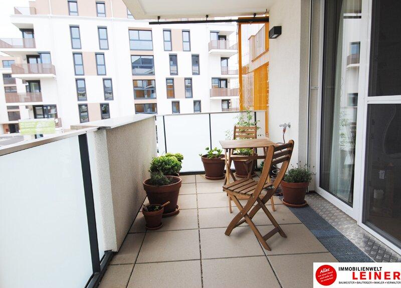 Großzügige Einzimmerwohnung mit Tiefgaragenplatz in Schwechat Objekt_9688 Bild_786