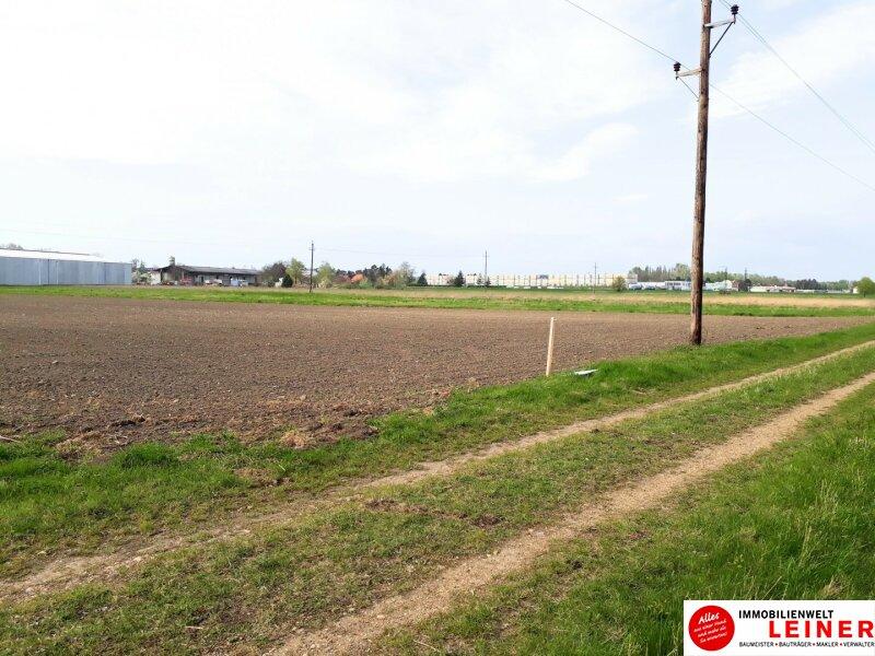 Großflächiges Betriebsgrundstück in Enzersdorf an der Fischa Objekt_10234 Bild_469