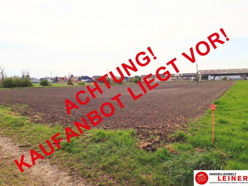 Großflächiges Betriebsgrundstück in Enzersdorf an der Fischa Objekt_10669