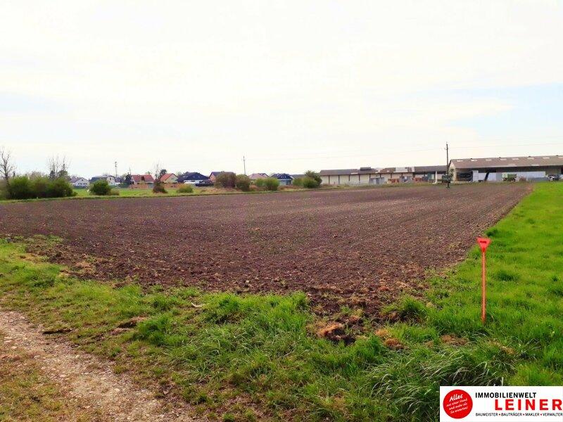 Großzügiger Betriebsbaugrund in Enzersdorf an der Fischa! Objekt_10670