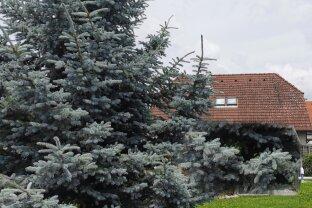 """Haus auf 657m² Grundfläche - Weikendorf - 5 Zimmer - """"Eigengrund"""""""