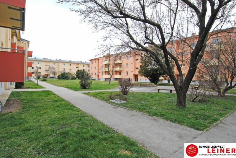Schwechat - Single Wohnung in zentraler Lage /  / 2320Schwechat / Bild 6