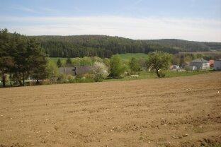 Großzügiges Baugrundstück nahe Thermenresort Stegersbach