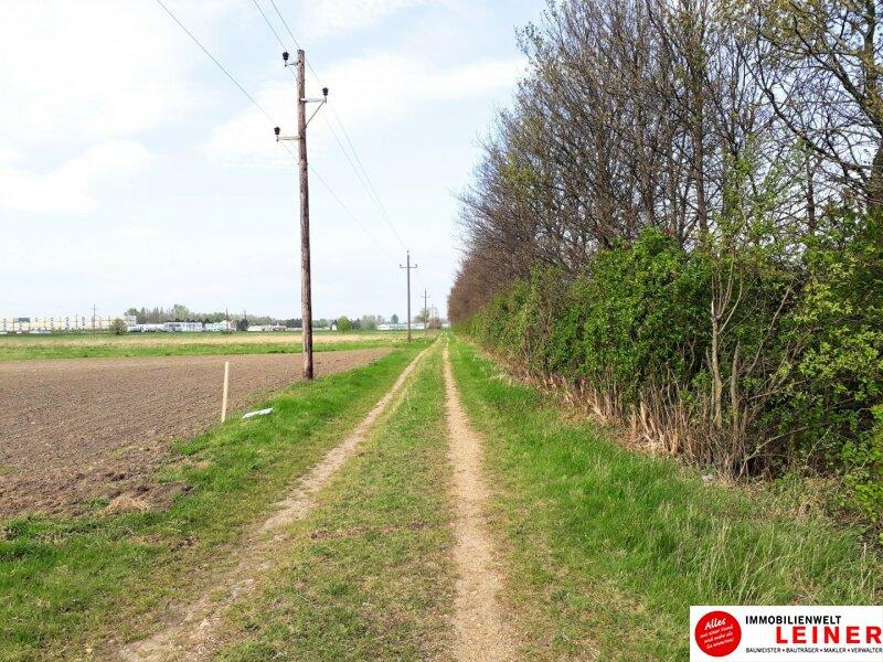 Betriebsgrundstück an der B10 - Enzersdorf an der Fischa! Objekt_10671 Bild_661