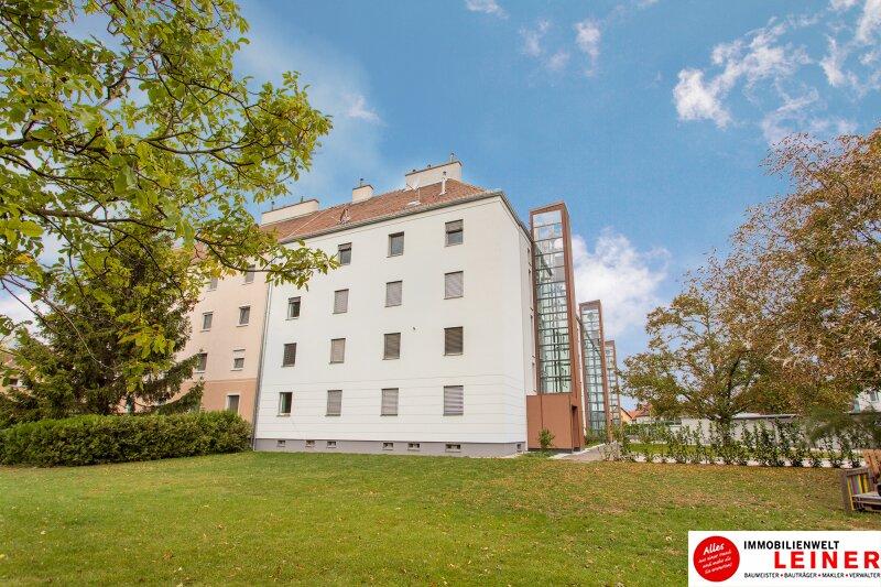 Schwechat - Rannersdorf:  wunderschöne 2 Zimmer Mietwohnung in ruhiger Hoflage! Objekt_11411 Bild_298