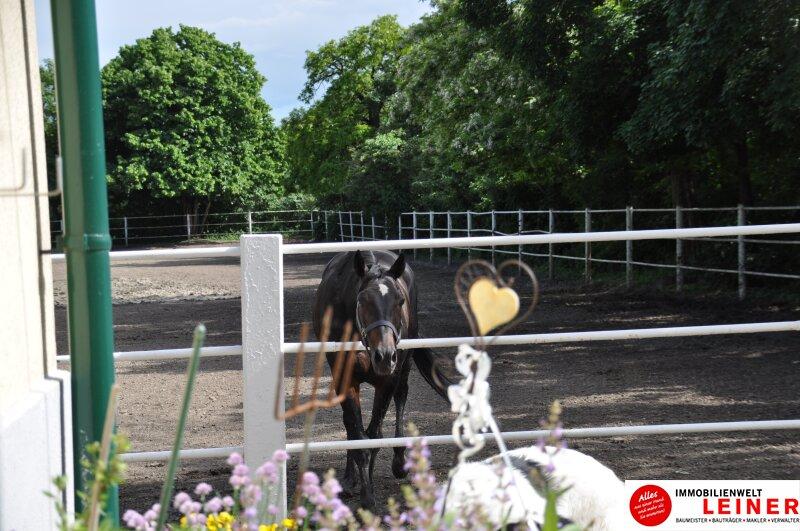 Pferde/Tierliebhaber aufgepasst! Verwirklichen Sie sich Ihren Traum vom eigenen Haus + Pferdestall! Nähe Wien! Objekt_6933 Bild_405