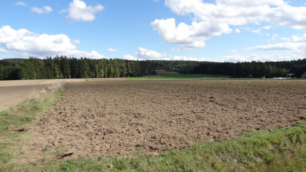Immobilien Angebot in Hirschenschlag