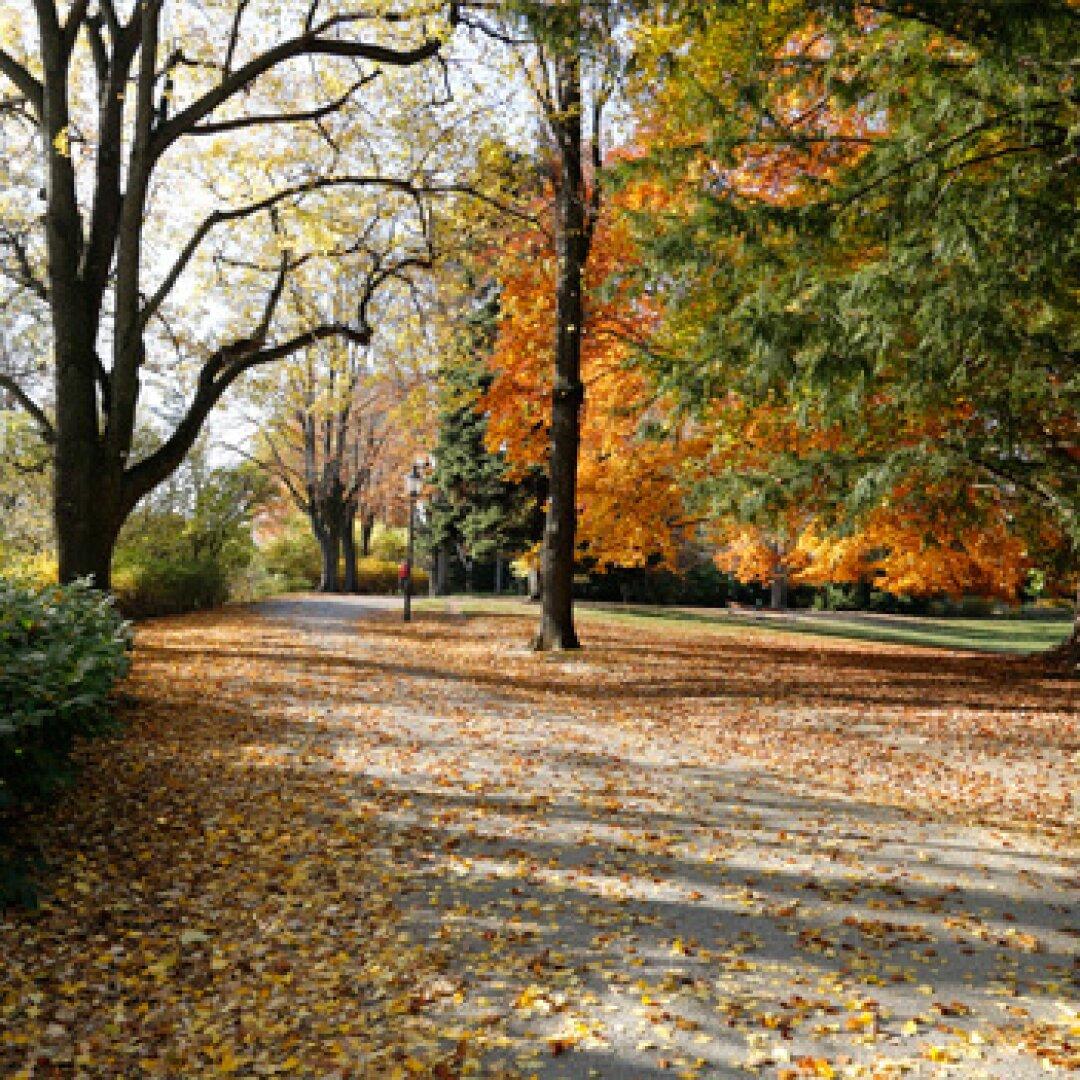 Umgebung Türkenschanzpark