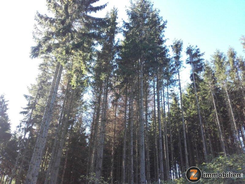 Wald mit guter Zufahrt in Hanglage /  / 7434Bernstein / Bild 2