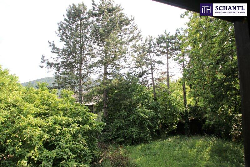 Naturidylle ! Absolute Toplage ! Südseitiges Traumgrundstück mit ausbaubarem Haus in Hinterbrühl ! /  / 2371Hinterbrühl / Bild 3
