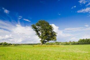 Land- und Forstwirtschaft mit Altbestand (Hofgebäude)