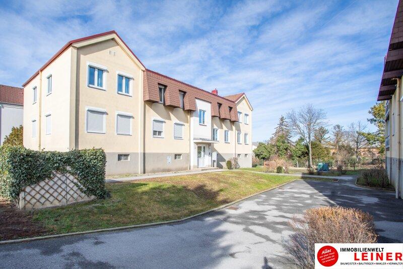 Hier wird Ihr Wohntraum Wirklichkeit! 3 Zimmer Mietwohnung in Enzersdorf an der Fischa Objekt_13908 Bild_229