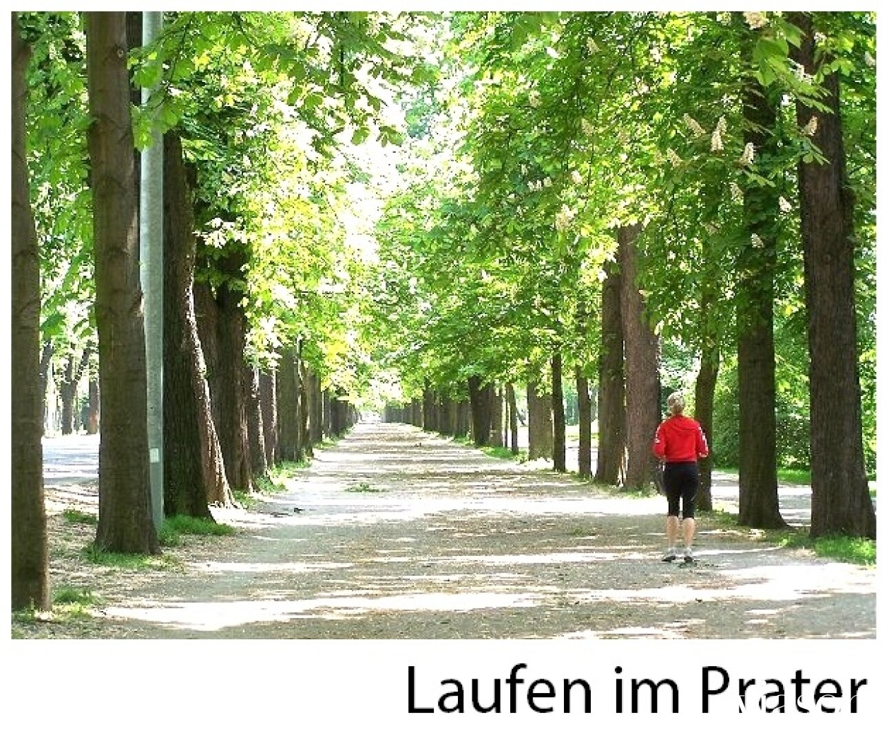 Laufen im Prater