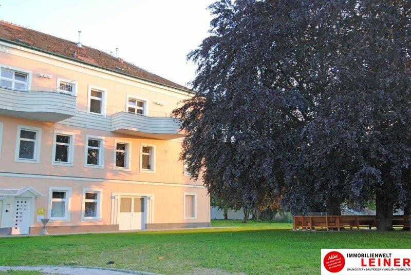 Schwechat - Mietwohnung 2 Zimmer mit großem Balkon  -  stilvoll wohnen in der geschichtsträchtigen Villa Mautner Markhof! /  / 2320Schwechat / Bild 8