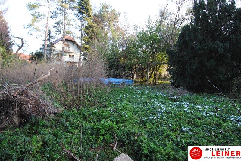 Ihr Haus in Leopoldsdorf - jeden Tag Urlaub im neuen Zu Hause Objekt_9231 Bild_790