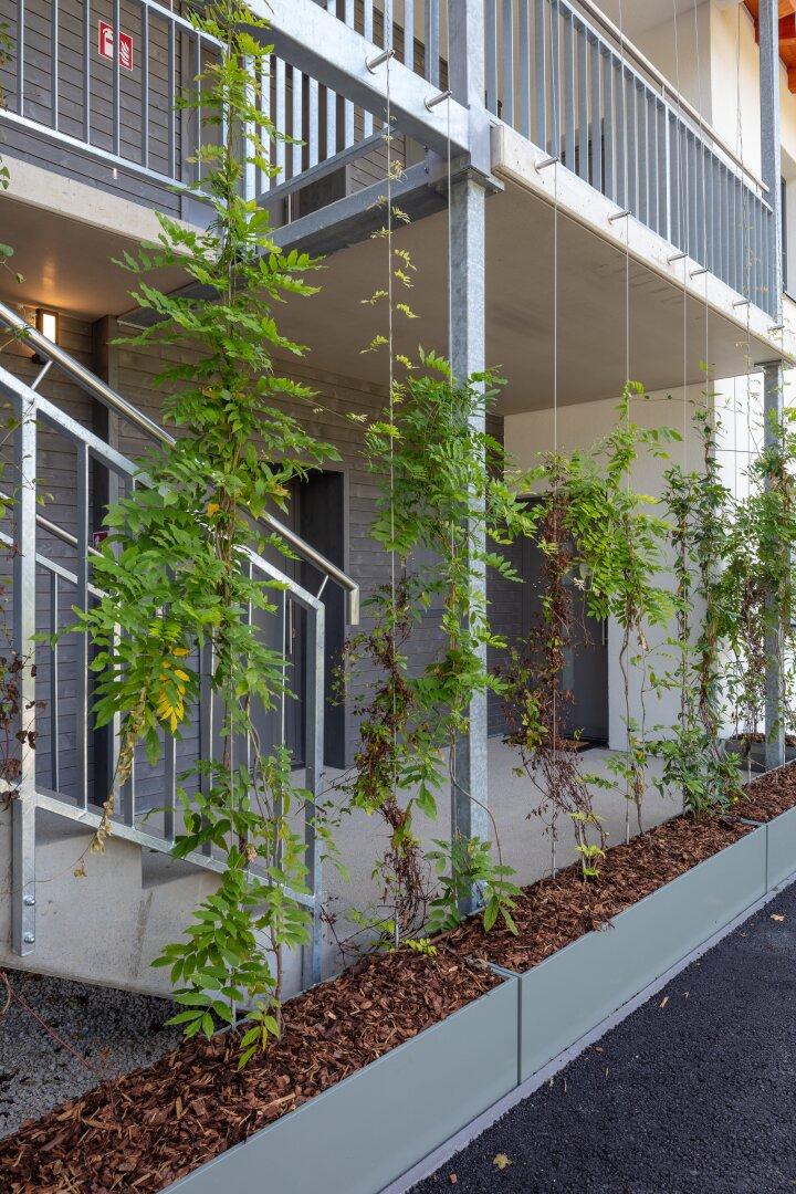 Haus 2 mit grüner Fassade