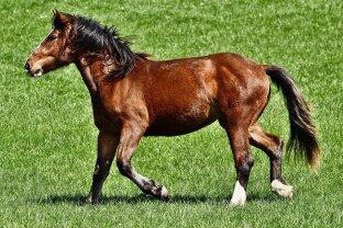 Pferdeliebhaber aufgepasst! Landhaus mit Pool und Reithalle nur 20 Minuten von Wien