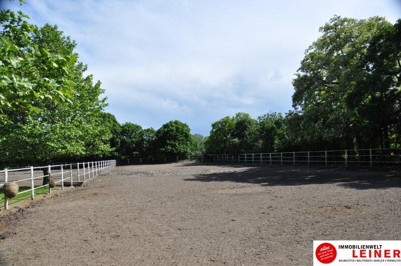 Pferde/Tierliebhaber aufgepasst! Verwirklichen Sie sich Ihren Traum vom eigenen Haus + Pferdestall! Nähe Wien! Objekt_6933 Bild_407