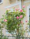 Rarität Sommerfrischehaus aus der Monarchie - 4000 m² Garten mit Altbaumbestand