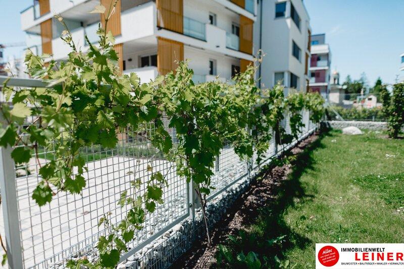 Schwechat - Penthouse - inklusive 28 m² Terrasse Objekt_9966 Bild_284