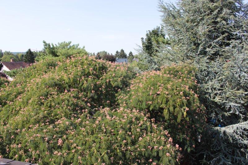 Ein- und/oder Zweifamilienhaus, absolute Ruhelage, idyllischer Garten - PROVISIONSFREI /  / 1210Wien / Bild 1
