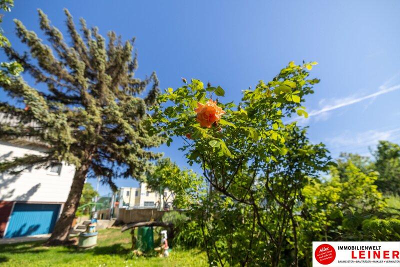 Einfamilienhaus in Schwechat 555m² EIGENGRUND  - den Herbst schon im eigenen Garten verbringen! Objekt_17835 Bild_64