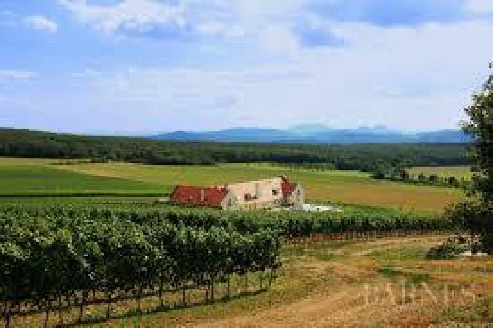 10 Hektar Weingut mit Schloss mitten im Jagdrevier