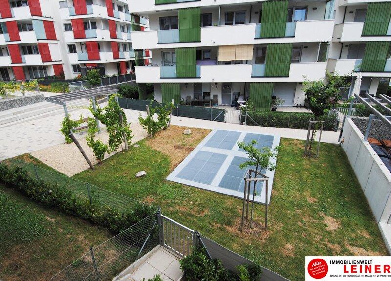 Großzügige Einzimmerwohnung mit Tiefgaragenplatz in Schwechat Objekt_9688 Bild_787