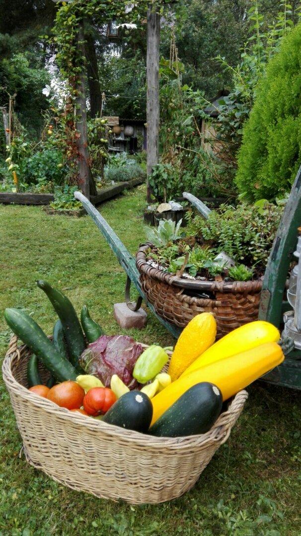 Reichhaltige Ernte